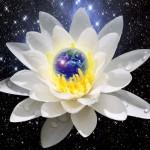 Sfaturile Lotusului